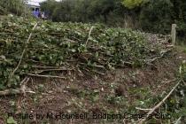 melplash-finished-hedge-2011