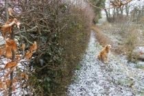 ittlebredy-march-11th-2013-dusty-snow before